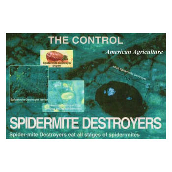 Spider Mite Destroyers